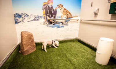 Which U.S. Airport is the Most Pet Friendly?