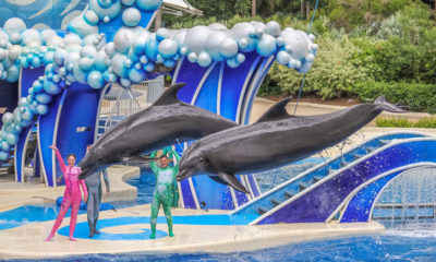 SeaWorld to End 'Dolphin Surfing'